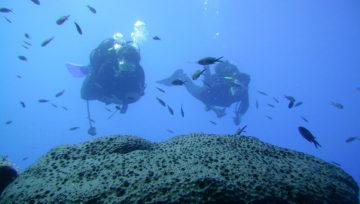 Scuba Diver course 50% discount