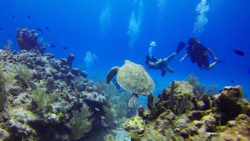 10 Reasons to Try Scuba Diving