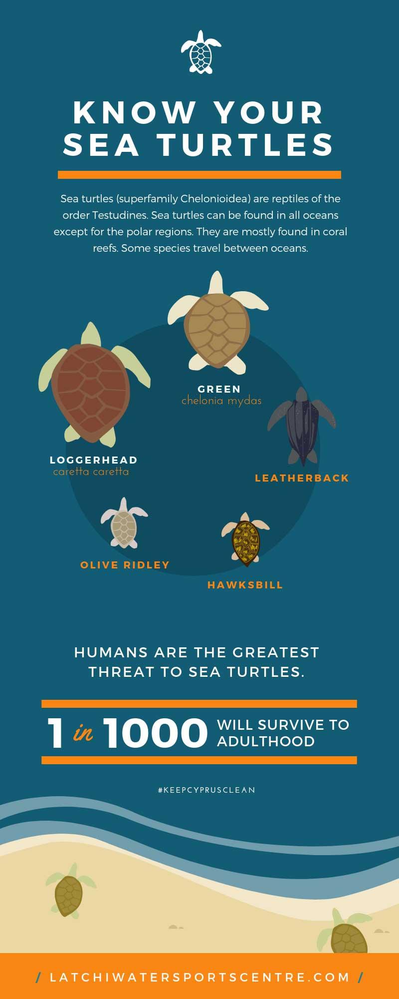Know your Turtles - Latchi Dive Centre