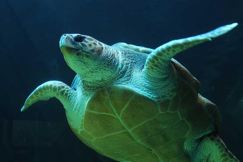 Turtle Rescue in the Akamas Peninsula | Latchi Dive Centre