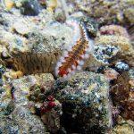 Akamas National Park Marine Life