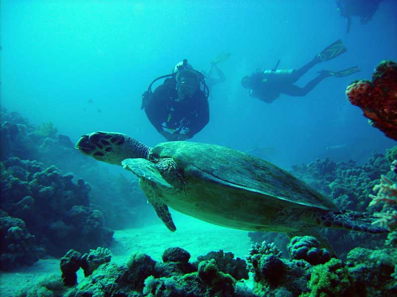 SPECIALITY DIVING COURSES – SPECIAL OFFER! Latchi Dive Centre in Cyprus